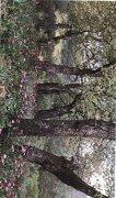 Ciudad Real: Naturaleza en Imagenes - Vicente Garcia Canseco - Diputación Provincial De Ciudad Real